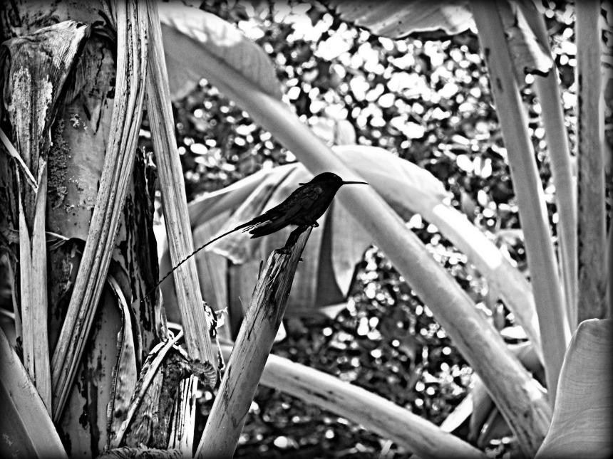 bw bird